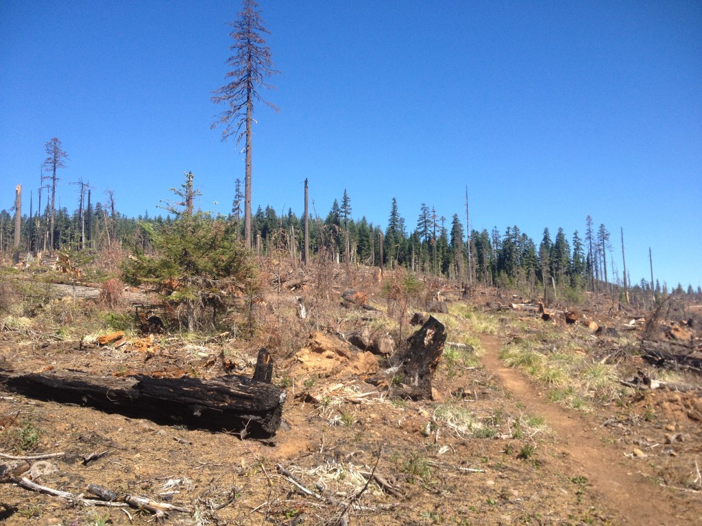 Looking north on the PCT through a former wildfire swath.