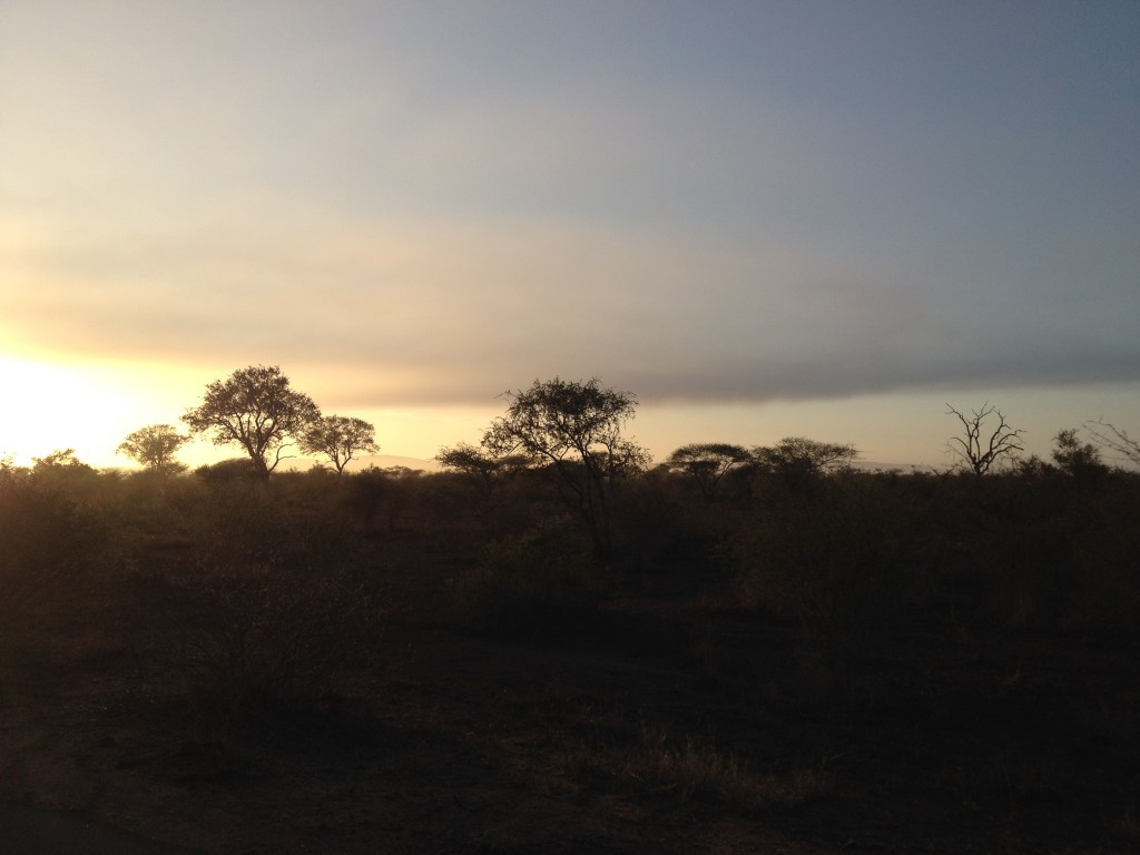 Sunrise at Kruger.