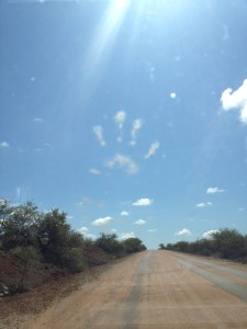 A vervet monkey print on the windshield of our car.